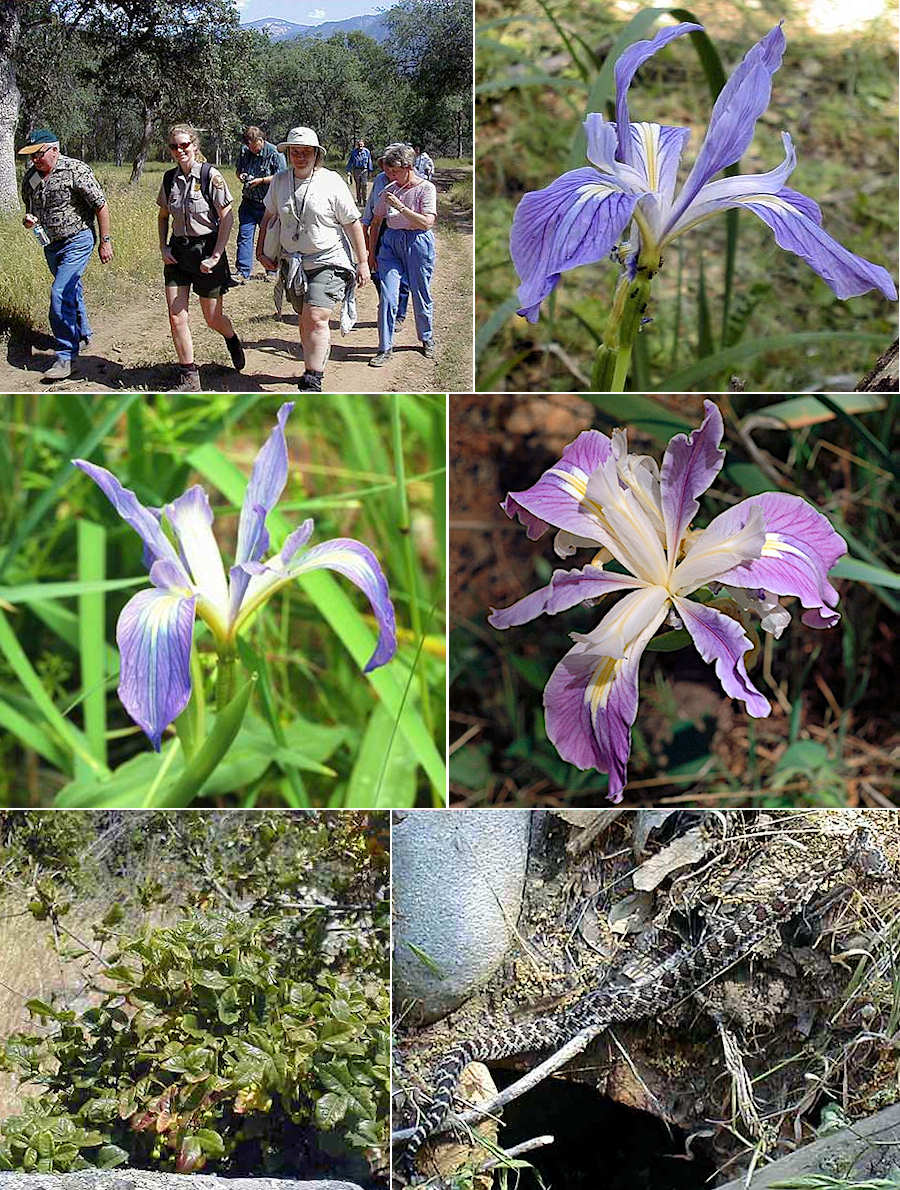 2004 expedition to see Munz's iris
