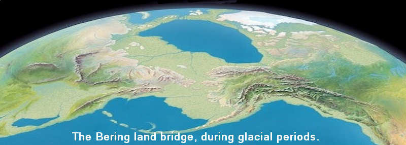lowered seas exposed the Bering land bridge