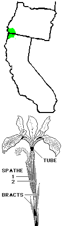 Siskiyou iris map and flower