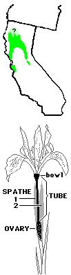 Iris macrosiphon map and flower